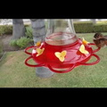 Rain Dance Hummingbird