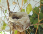 Feather in her nest 1.8.15